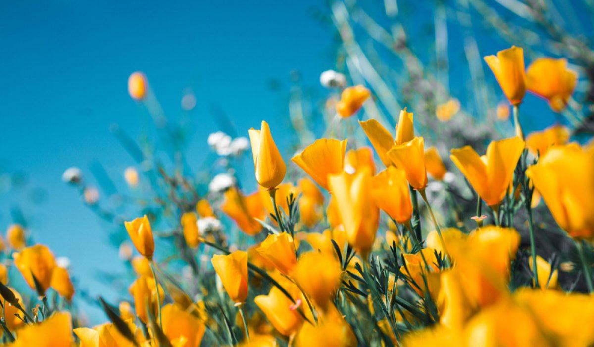 Sacramento Home and Garden Spring Show